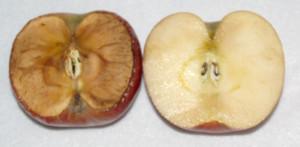 Процесс старения на примере яблока.