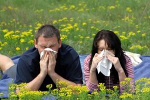 Аллергия на цветение, амброзию и пыльцу