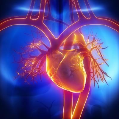 Заболевания сердечно-сосудистой системы и их профилактика