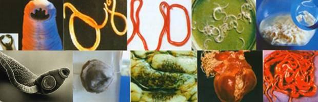 Фото разных паразитов
