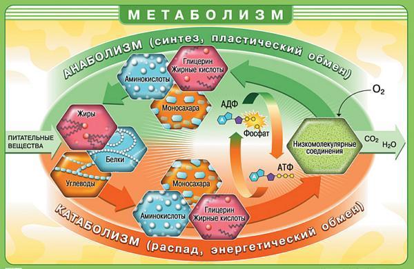 metabolizm_proces